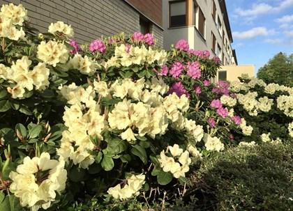 Cały Szczecin w kwiatach